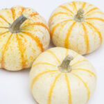 fall, pumpkins, pumpkin patch,