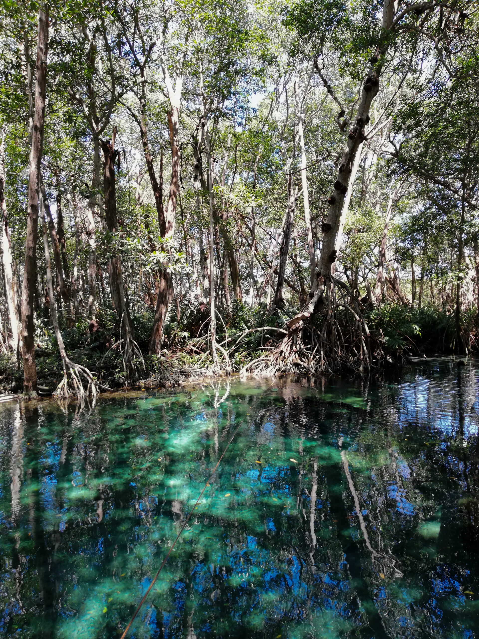 yucatan, homun, cenotes, sink holes, travel guide, mexico